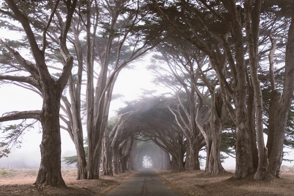 © Matt Gee/REX/Shutterstock  Аллеи туманного мыса Пойнт Рейес вКалифорнии. (Еще больше красот