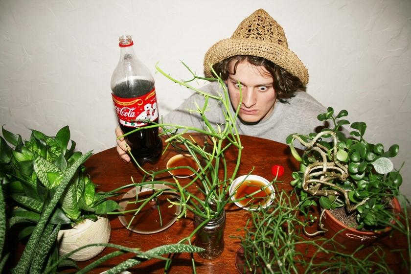 5. Здоровые растения Колу используют и в качестве пестицидов. Чтобы избавить растения от вредителей,
