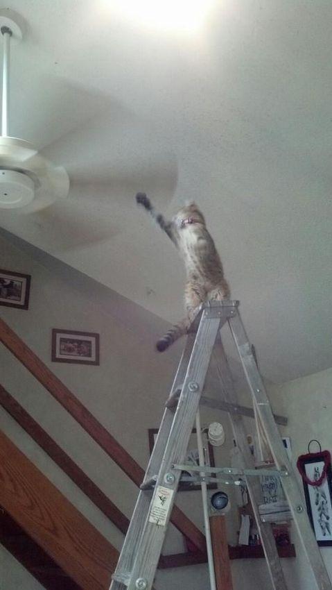 Злобные котики, которые, кажется, замышляют убийство своего хозяина