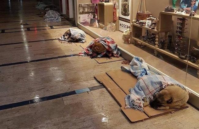 © facebook.com  ВСтамбуле владельцы магазинов устроили для бродячих собак временный приют вт