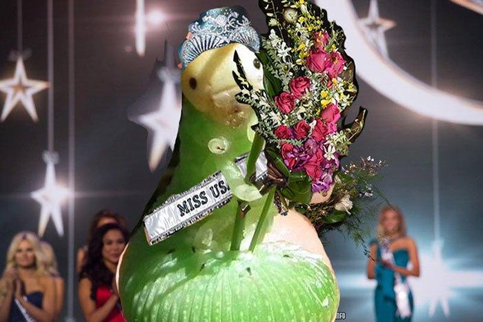 Очаровательная гусеница с травинкой неожиданно стала звездой фотошопа