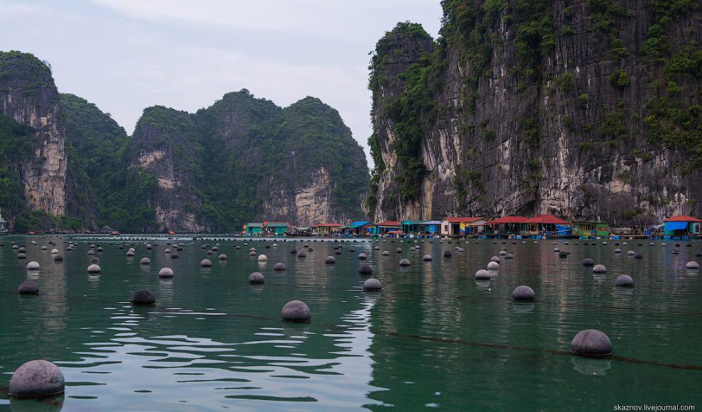 На одном из островков можно понаблюдать за процессом добывания жемчужин из раковин.