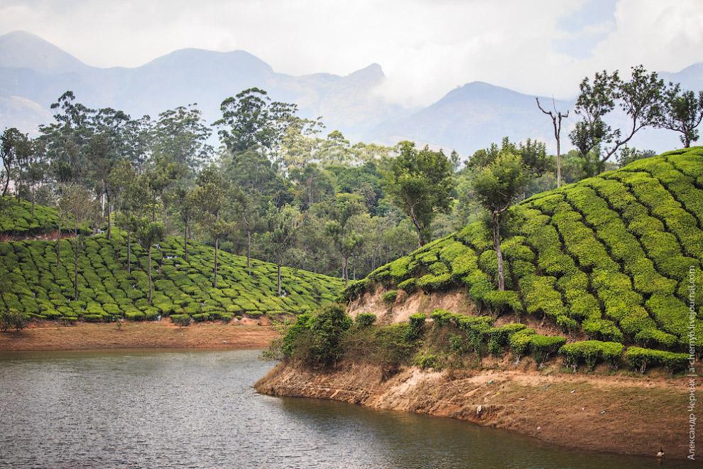 Среди множества плантаций есть особенно живописные, со своими озерами…