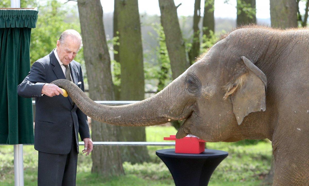 Принц кормит слона во время визита в зоопарк.