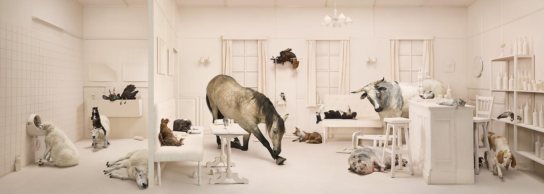 ANIMALCOHOLICS (9 pics)