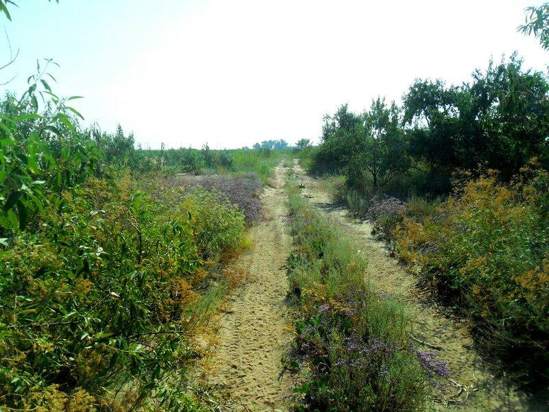 Лесной дороги позабытой, след... SAM_3282.JPG