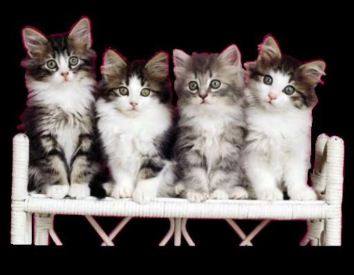 кошки-пнг-1.png