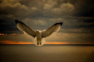 """Из серии """"Никогда не учите птиц летать..."""""""