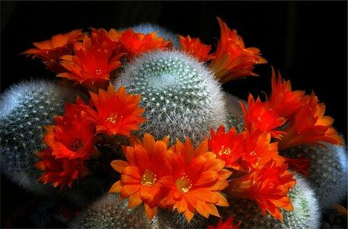 kaktusyi - www.GdeFon.ru