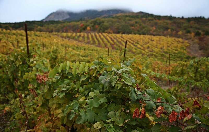 Осенний виноград