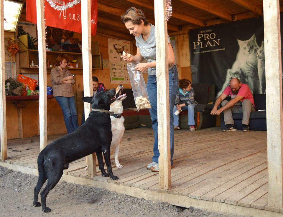 ЧеГевара собака из приюта догпорт