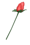 SSS_Roses_Element-6.png
