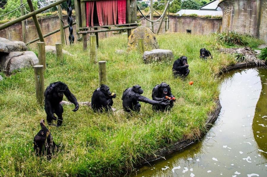 1. Веллингтонский зоопарк Этот зоопарк, считающийся самым лучшим в мире, находится на Северном остро