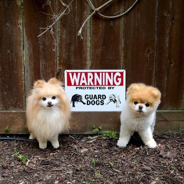«Осторожно. Территория охраняется сторожевыми псами».