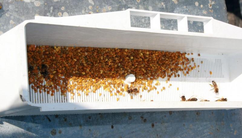 3. В решётке пыльцеуловителя сделаны круглые отверстия, проходя через которые пчёлы вынуждены подгиб