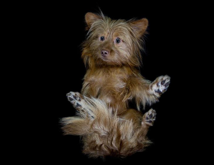 2. В таком ракурсе собаки выглядят как минимум забавно. (Фото The Underdogs Project):