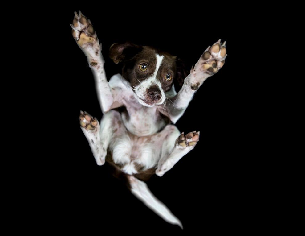 3. Фотография бигля. (Фото The Underdogs Project):