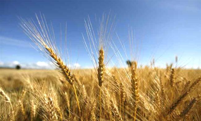 «Концерн Галнафтогаз» выходит на сельскохозяйственный рынок