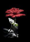 tube danimage fleur rouge.png