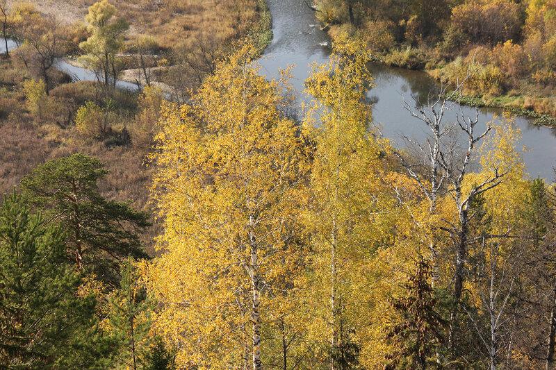 Жёлтые берёзы и река на Южном Урале