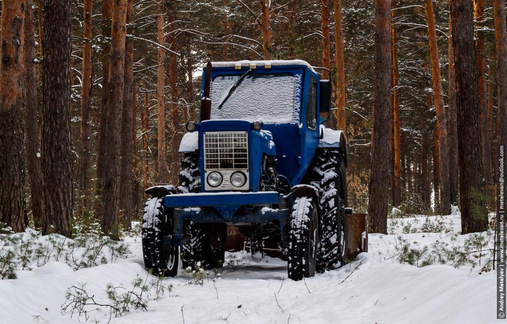 Синий трактор в снегу, в сосновом лесу
