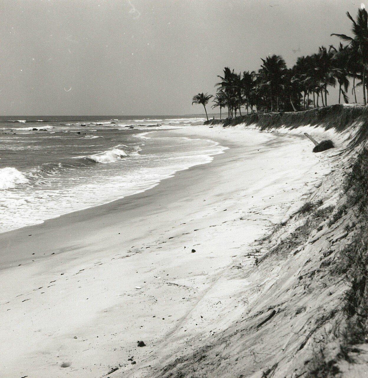 Гана. Тема. Гвинейский залив. Пальмовая роща во время прилива