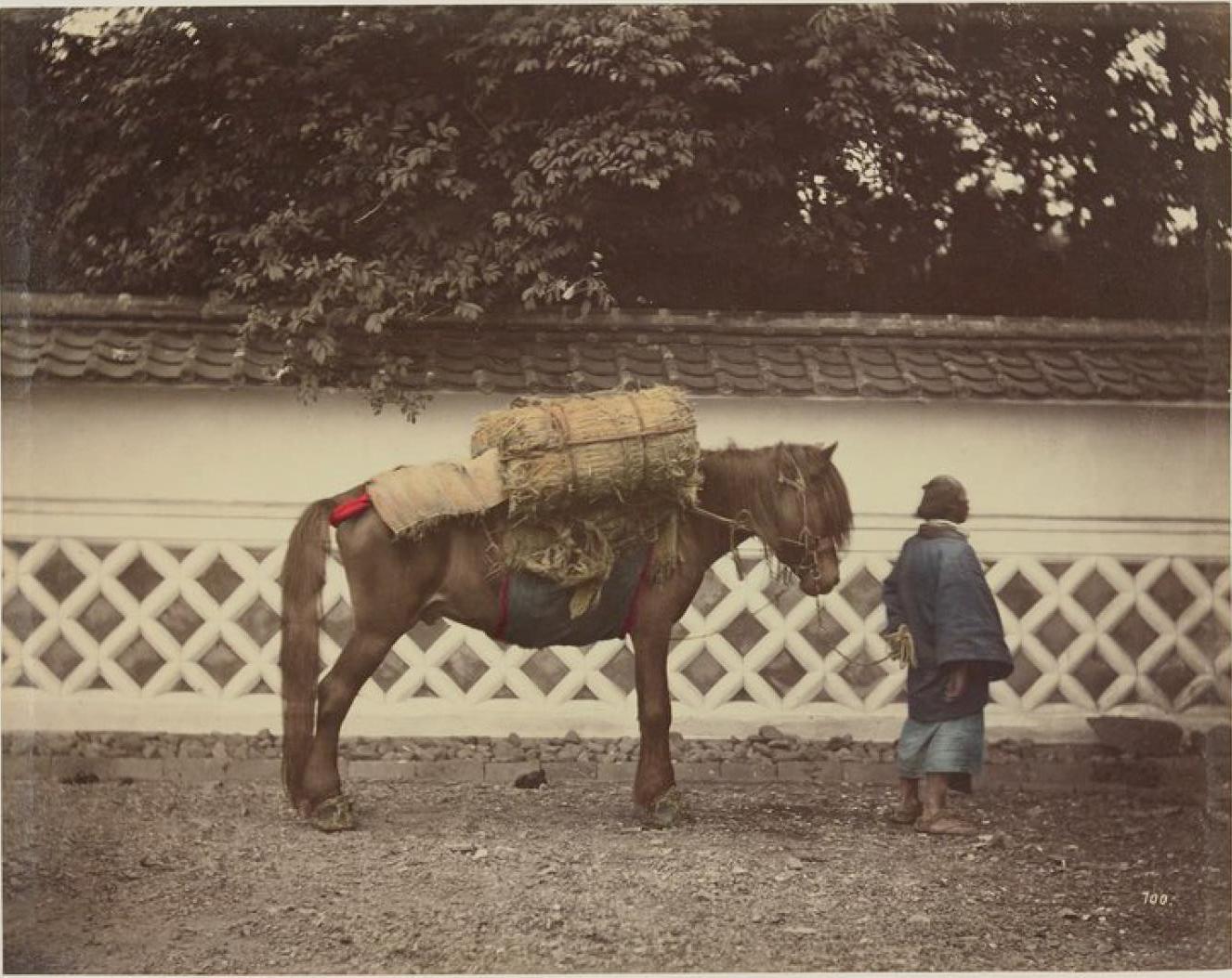 Навьюченная лошадь