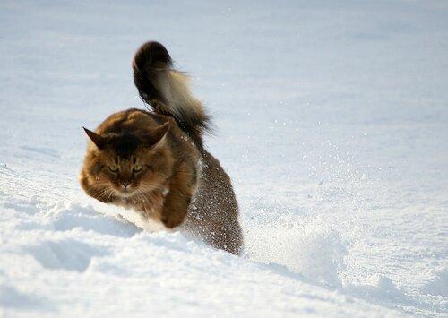Кот- снегоход