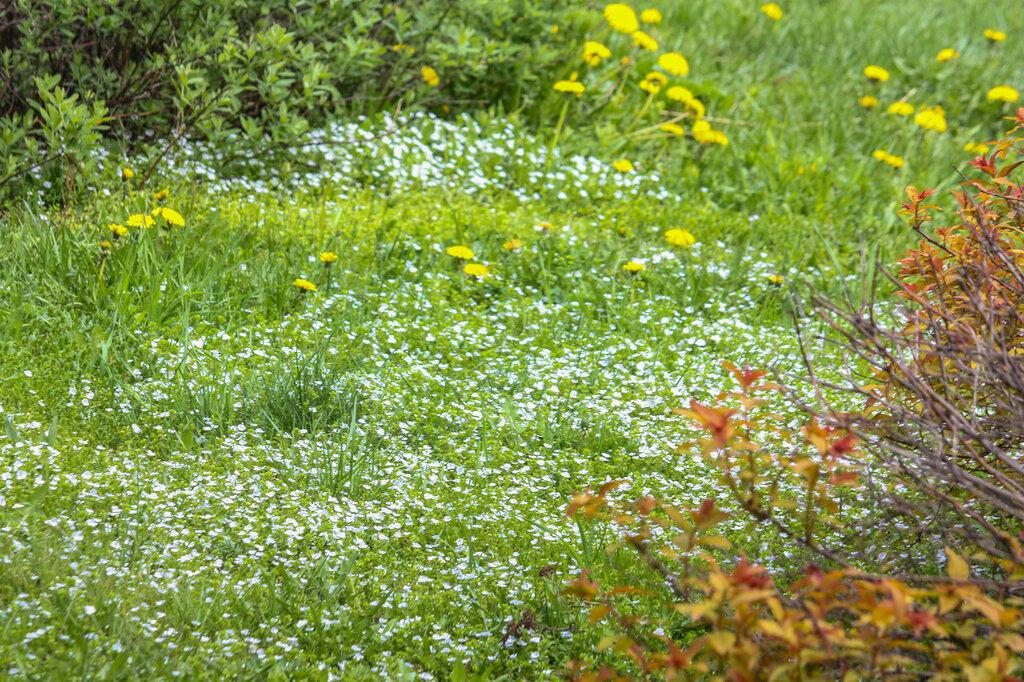 Ботанический сад-21.jpg