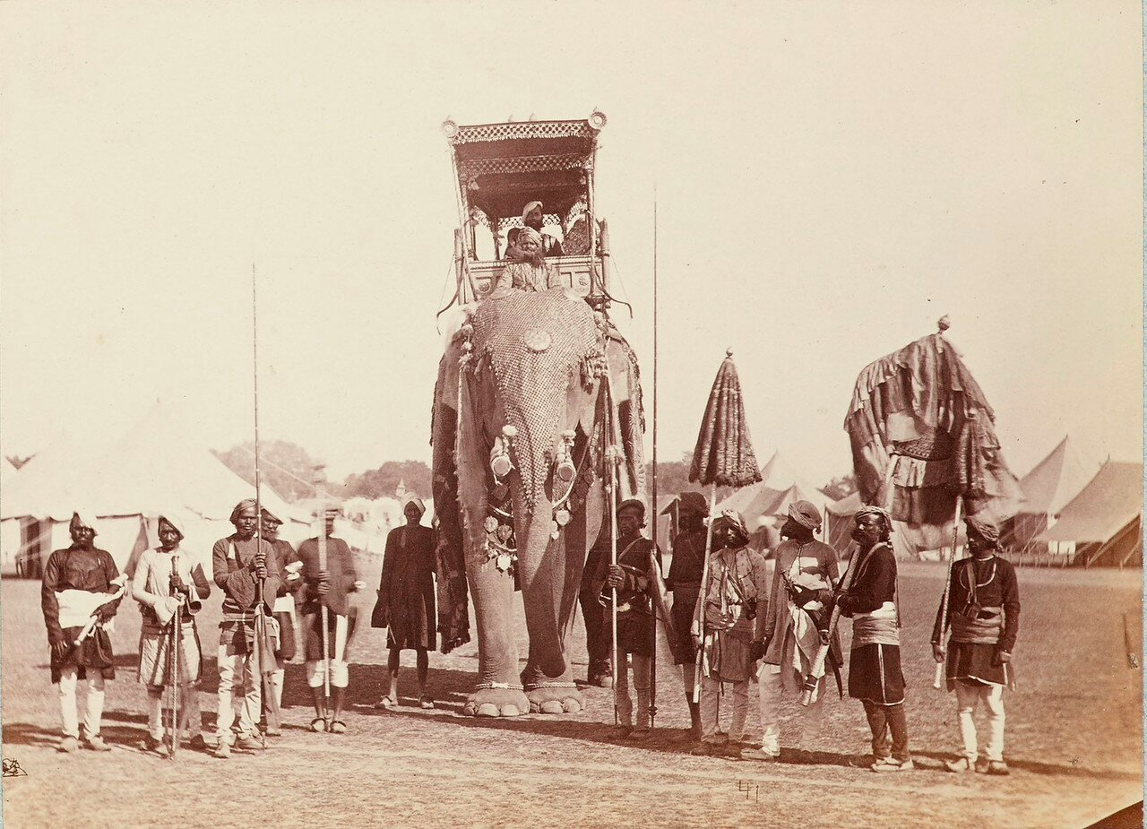 175. Пратап Сингх, махараджа Орчха на парадном слоне