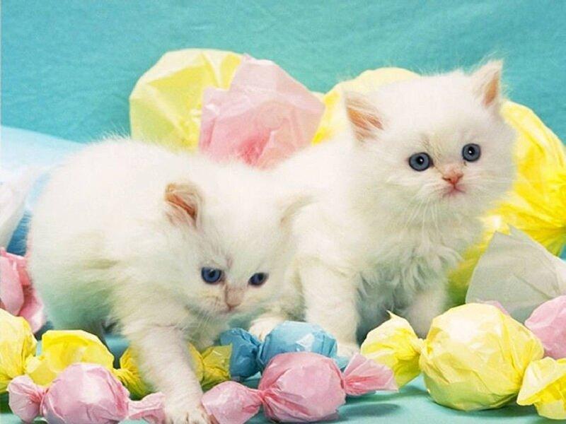 Красивые и профессиональные фото котов 0_dcac_300a9443_XL