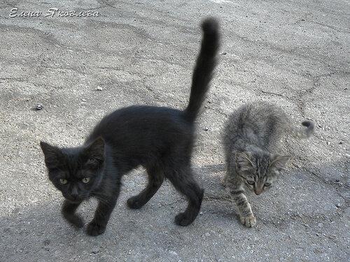 один серый, другой... черный