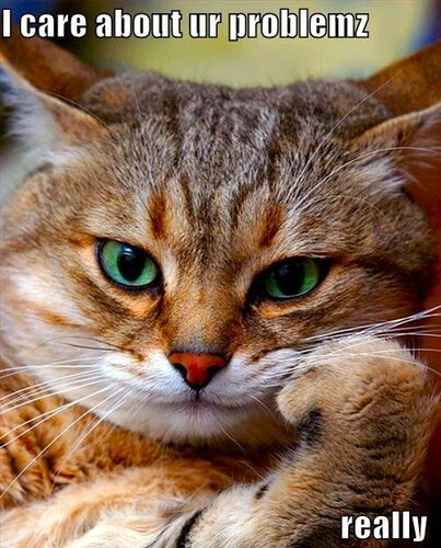 Добрый Животновод — «cat-cares-about-problems.jpg» на Яндекс.Фотках
