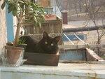 Балконный житель