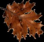 AutumnBreeze_MoleminaScrap_el (30).png