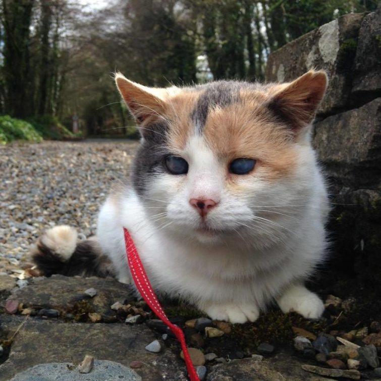 Слепая кошка покорившая самую высокую гору в Ирландии
