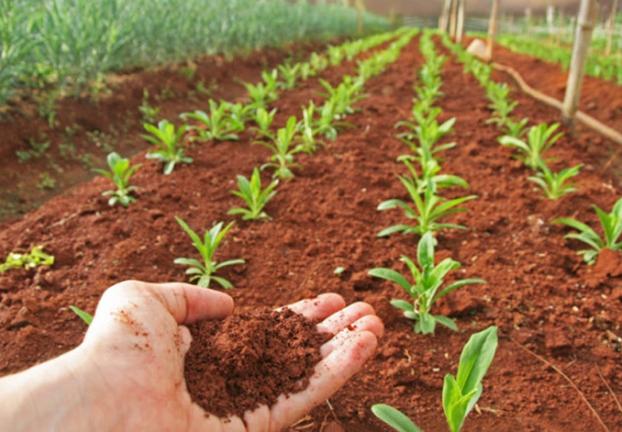 Марсианский урожай: голландские ученые вырастили овощи напочве Красной планеты