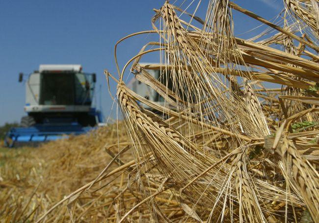 УЗА: Украина побила рекорд вэкспорте зерна