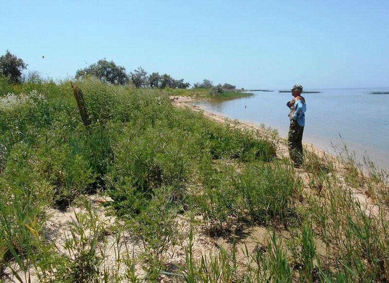 На летнем дальнем берегу ... DSCN6366.JPG