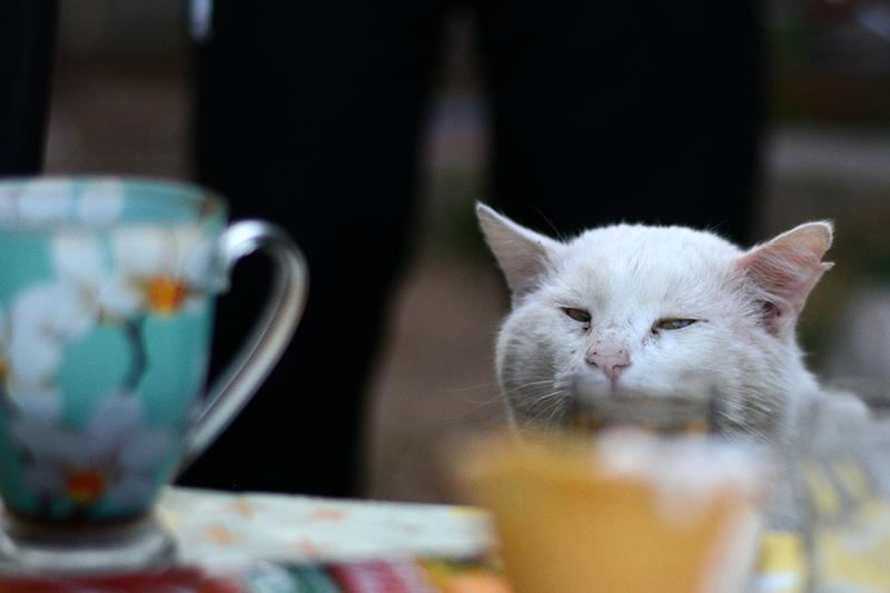 31 мая кот 2.jpg