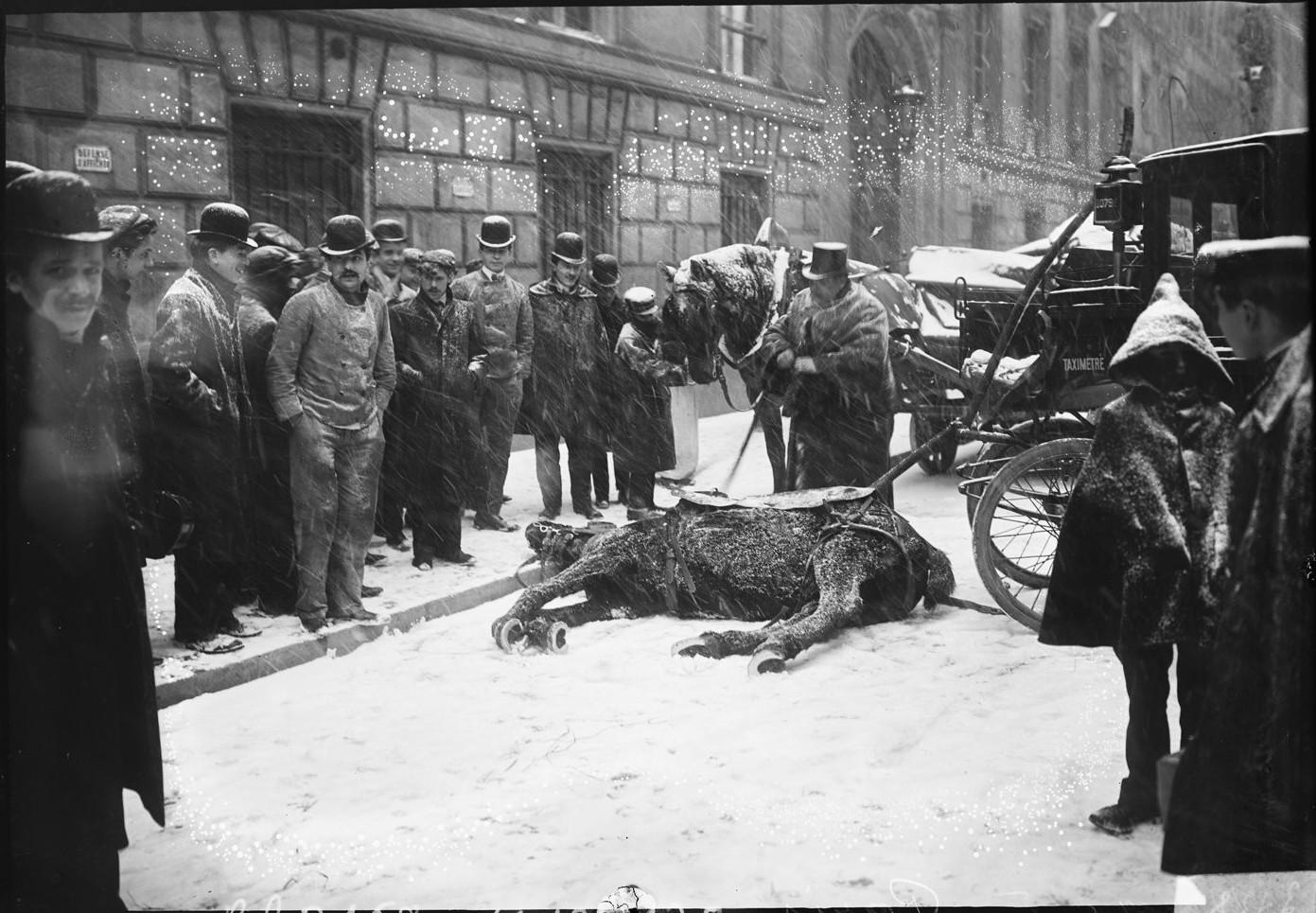 1908. Павшая лошадь в окружении зевак