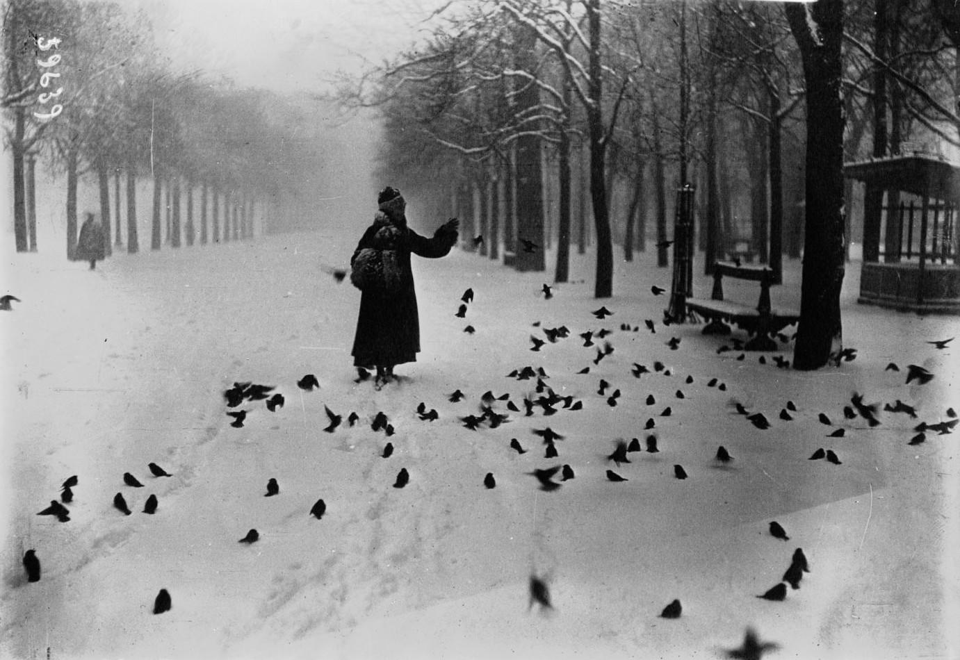 1916, Парижские птицы зимой