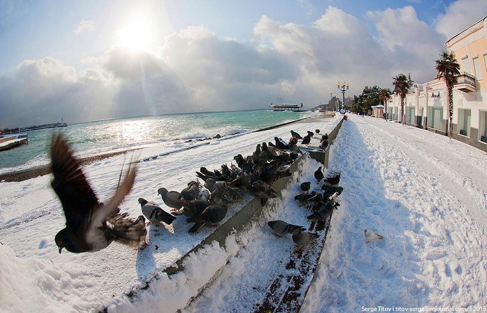 Голуби на набережной Ялты
