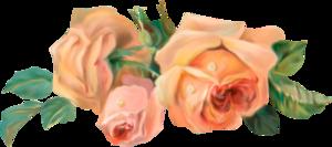 розы винтажные