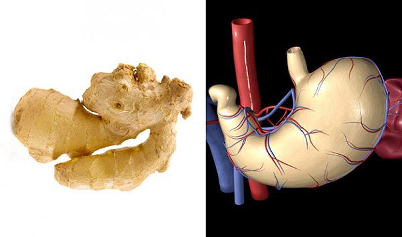 9. Имбирь — желудок Имбирь похож на желудок и, как известно, помогает справиться с тошнотой. Он соде