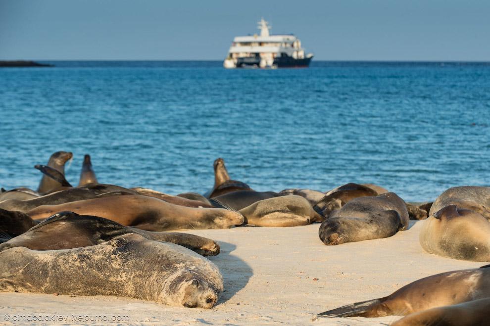 20. Смотрите также « Удивительные создания на Галапагосских островах ».