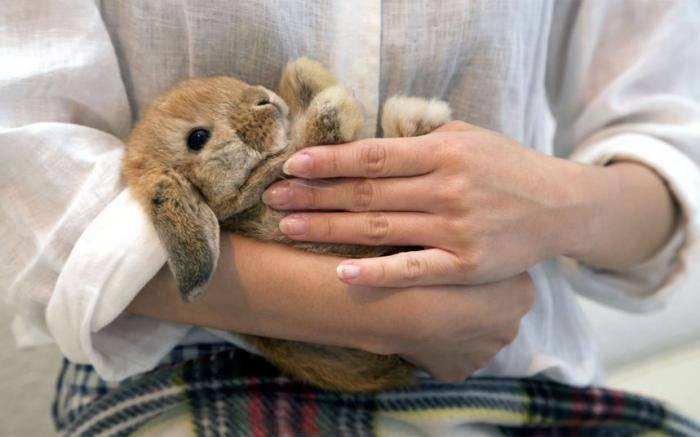 Кафе кроликов. Расположено это кафе в Токио, и оно полно кроликов различных пород. Зайдя в кафе вы д