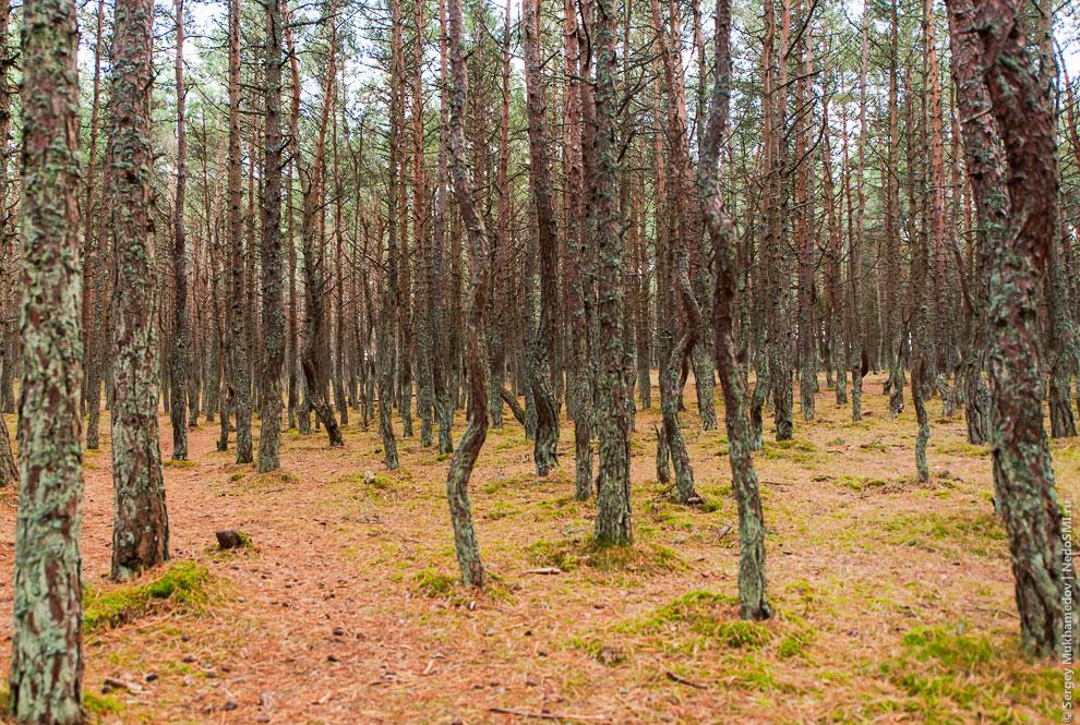 Появляются одинокие странные деревца, потом их становится все больше...