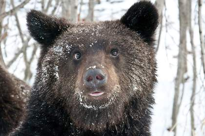 ВРомненском районе медведь напал наохотника