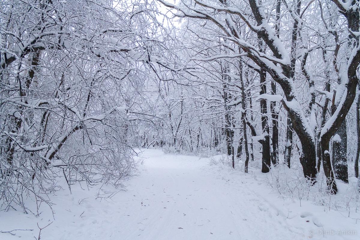 Кумысная поляна зима фото 12